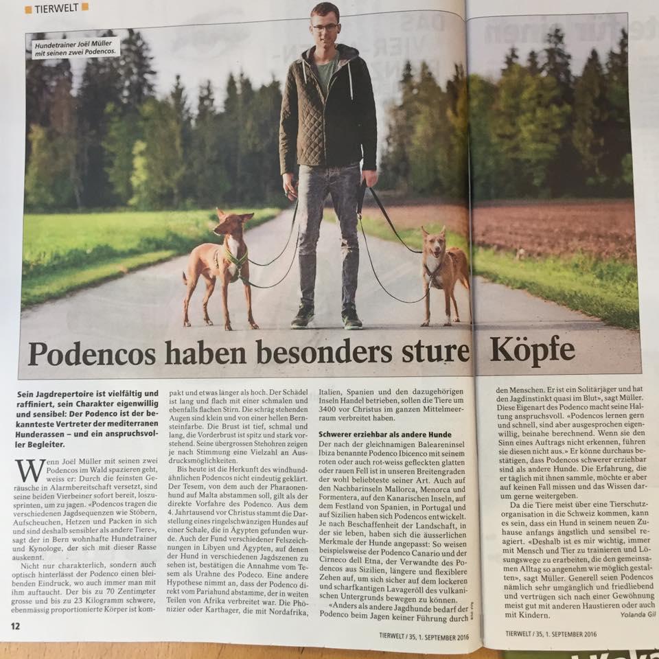 tierwelt_artikel